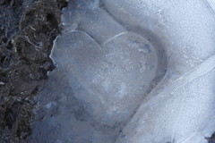 Cold hearted (jillyspoon) Tags: cold ice heart freezing below icy zero degrees icecold coldheart hearted