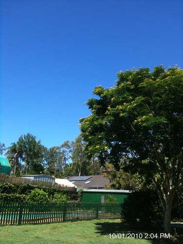 Back yard, not a cloud in sight