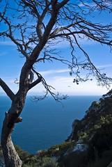 guardi ser (raletmori) Tags: ocean sea tree arbol mar mediterraneo arbre oceano calpe mediterrani calp peondeifach penyaldifach