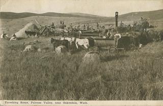 Threshing Scene, Palouse Valley, 1908 - Oakesdale, Washington