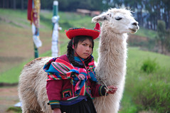 Curious (john.weigold) Tags: peru america south llama