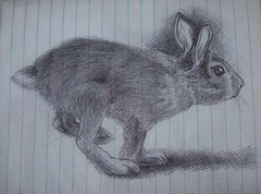 rabbit (kingleoni) Tags: pen drawing innk
