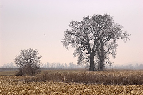 Bare trees in winter, at Columbia Bottom Conservation Area, in Saint Louis County, Missouri, USA