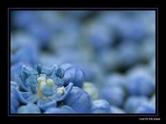 (Per Erik Sviland) Tags: flower macro closeup nikon micro erik per d300 pererik sviland sqbbe pereriksviland
