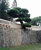 Tree and its roots. Tainan, Taiwan (deepstoat) Tags: tree 120 film mediumformat roots taiwan oversize mamiya7ii kodakportra bestoftaiwan deepstoat