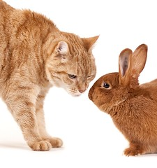 Cat meets bunny (edwindejongh) Tags: pictures pets rabbit bunny animals konijn adorable onwhite dieren jaap briefencounter closeencounter animalphotography ontmoeting redandbrown snuffelen bej impressedbeauty superaplus aplusphoto infinestyle edwindejongh catvertise sabinevanderhelm dierenmodellen catmeetsbunny katenkonijn roodenbruin animalmodellingcappcappdierenfotoscats