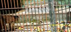 Hora do almoo (RBastos) Tags: rio brasil de janeiro que meu jardim irmo com zoolgico paulo so passeio niteri veio