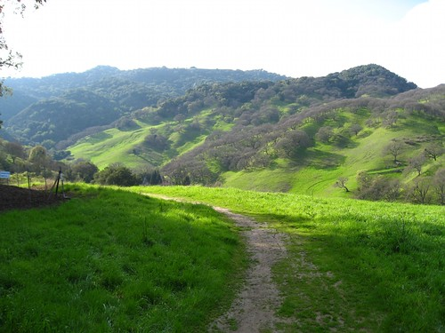 2010-01-31_briones_very_very_green.jpg