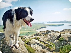 (meg price) Tags: summer wales walk bordercollie barney stdavids mywinners
