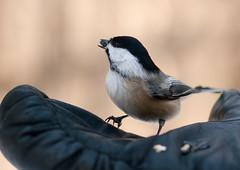 BirdWalk-11