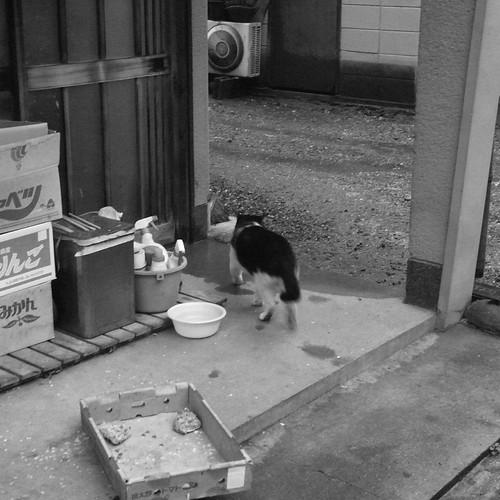 Today's Cat@2010-02-15