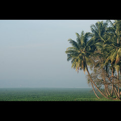varathur- bangalore kerala (sash/ slash) Tags: lake tree green coconut bangalore mini kerala sash karnataka sajesh varathur