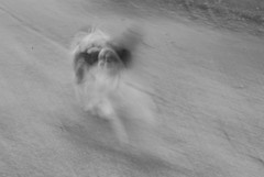 Fast Doggie
