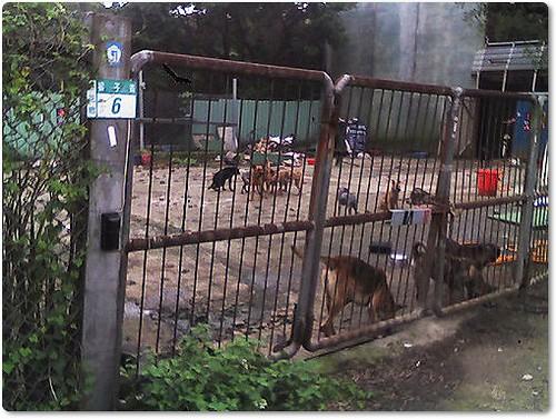 「募資源志工」賈鴻秋老師不幸往生,搶救老師200斷糧犬,動物救援小組網友發起募志工與狗糧