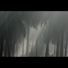 . (sash/ slash) Tags: mist cold tree coconut bangalore sash chill sajesh varathur