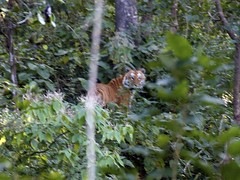 Indian Wild life Sanctuaries, Jim Corbett Park