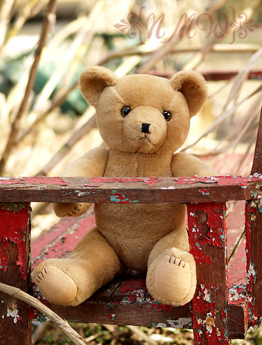 Ted on bench