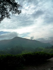 Asia 007 (Neil Hannam) Tags: malaysia cameronhighlands teaplantation