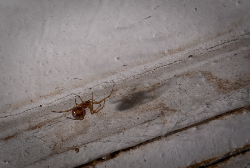 Day 140: Spider