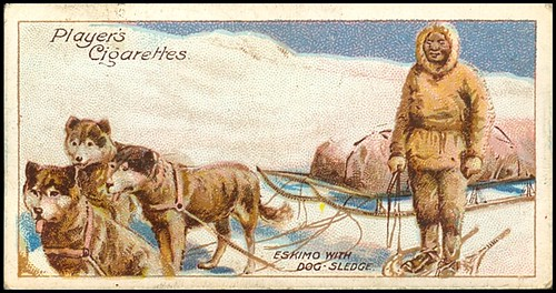 Eskimo With Dog-Sledge
