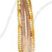 Coupe longitudinale d'un épi de maïs (Zea mays).