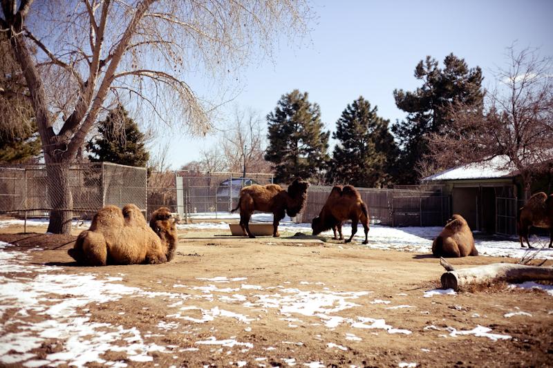 Zoo (6 of 15)