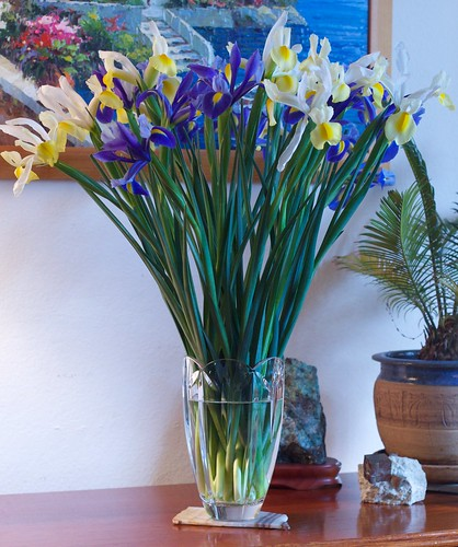 Dutch Iris: 03-07-10