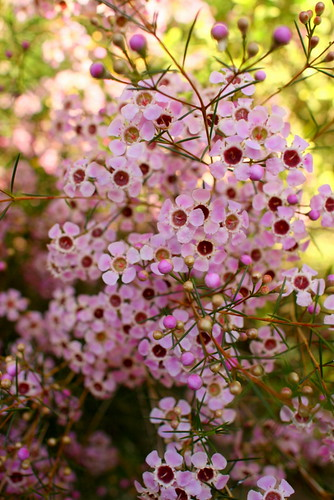 Spring Snaps :: Backyard