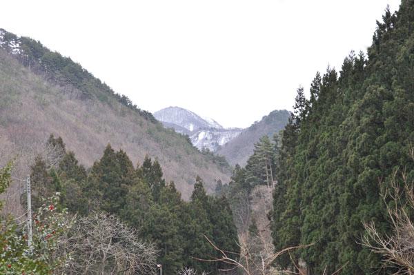 The mountain where a camellia blooms