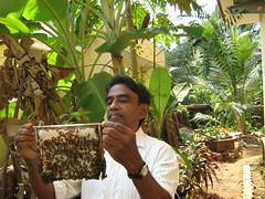 It is all Honey (tpms5) Tags: kerala honey honeybee cannanore malabarmagazine kannuar