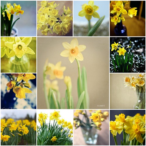 [Things I ♥ Thursday] Daffodils