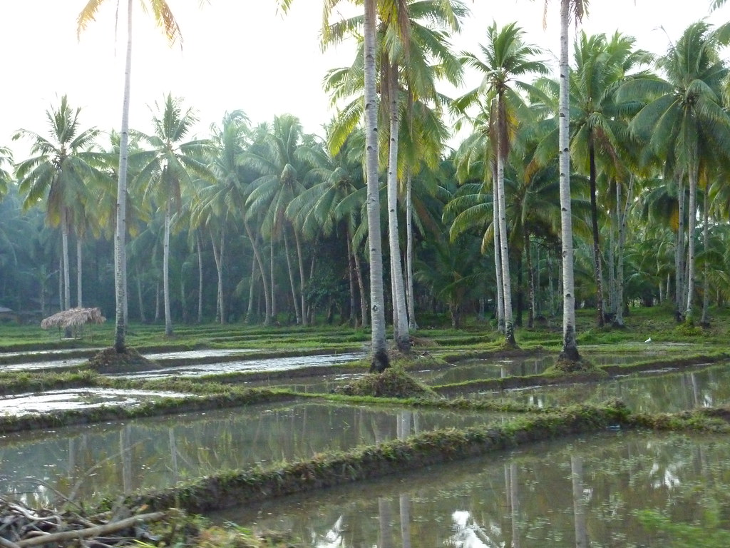 Leyte-Liloan (3)