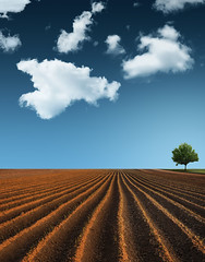 The Earth, The Sky And A Tree (Philipp Klinger Photography) Tags: blue light shadow red sky orange cloud color tree green nature field lines clouds germany landscape deutschland nikon europa europe hessen earth horizon bad line dust minimalism philipp minimalistic plowed hesse composing nauheim badnauheim klinger wetterau d700 dcdead vanagram