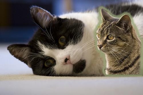Spare cat 0884