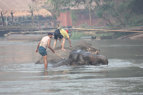 Elephants going for a bath near the Jungle River Rafts
