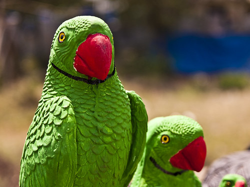 Very Cool Parrots!