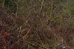 fowlmar26nikon_0016 (KJ3 apparently) Tags: trees colour nature woods chaos branches density fowlmere 5014 d90