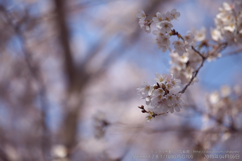 EF70-200mm F2.8L IS II USMと桜