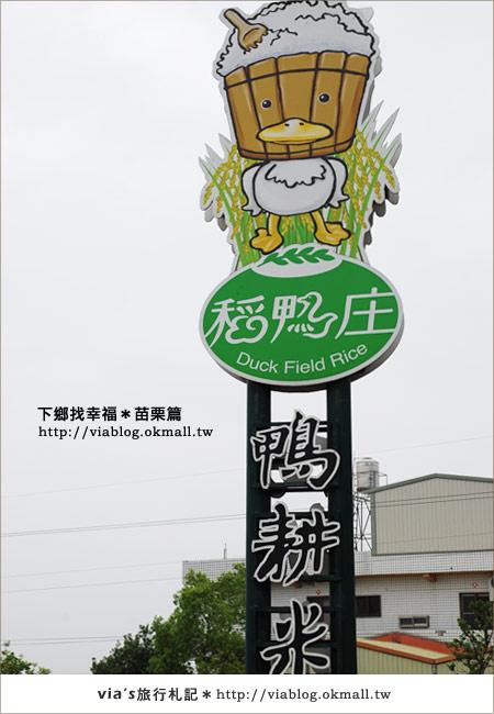 【苗栗旅遊】拜訪苗栗苑裡鎮農村再生~稻鴨庄鴨耕米2