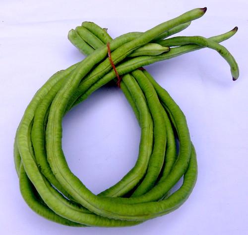 שעועית ירוקה ארוכה