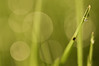 One (wenzday01) Tags: macro nature grass spring nikon bokeh sigma adobe droplet lightroom d90 cotcpersonalfavorite nikond90 presetsheaven 50mmf28exdgmacro sarahjinoble