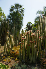 cactus sentinels looking tropical