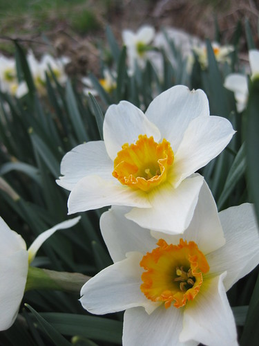 spring flowers springing