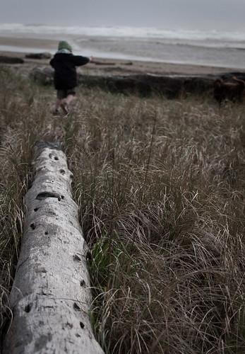 dead tree running