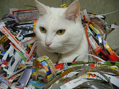 Kuppy which was discovered (kensogol) Tags: japan cat kitty niigata whitecat kuppy ppaper wastpaper