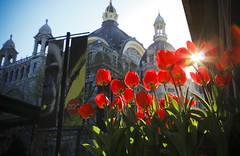 The last sun for today (Robin Dua Photography) Tags: flowers plants station zoo spring central april antwerp lente antwerpen bloemen centraal dierentuin kmda robindua april10zoo