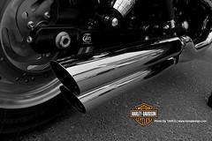 Harley Davidson   Exhaust (Tareq Abuhajjaj   Photography & Design) Tags: moon white black bike wow logo design big nice ride photos designer top hill gear harley sound saudi motor davidson rider riyadh exhaust reem wooow tareq speeed    foilacar tareqmoon tareqdesign
