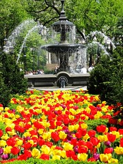Manhattan Spring (moonjazz) Tags: park nyc red urban plants sun newyork color colour green nature public fountain beauty yellow spring perfect day peace purple beds cityhall manhattan bigapple refuge