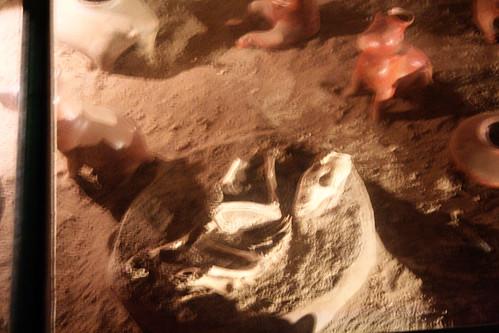 Colima - Dog Tomb