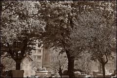 8 - 19 avril 2010 Paris Cimetire de Belleville (melina1965) Tags: trees cemeteries paris tree cemetery grave graveyard sepia nikon ledefrance noiretblanc graveyards faades belleville graves arbres april avril arbre faade 2010 spia cimetire smrgsbord 75020 cimetires d80 photoscape 20mearrondissement leagueofwomenphotographers umbralaward